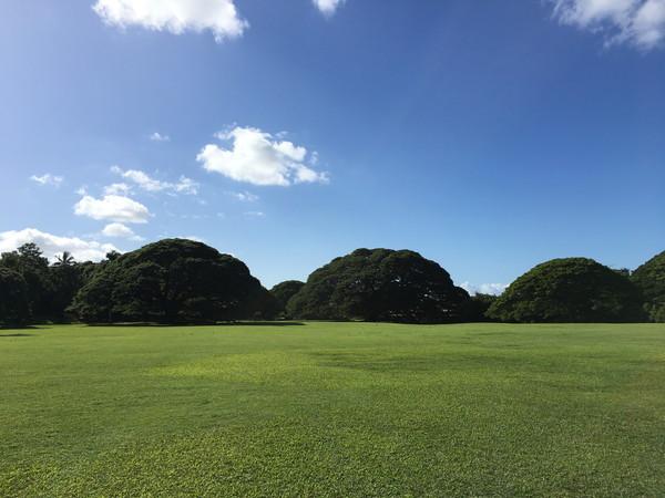 モアナルアガーデンズには日立の樹がたくさん